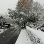 Baum drohte auf die Straße zu stürzen.